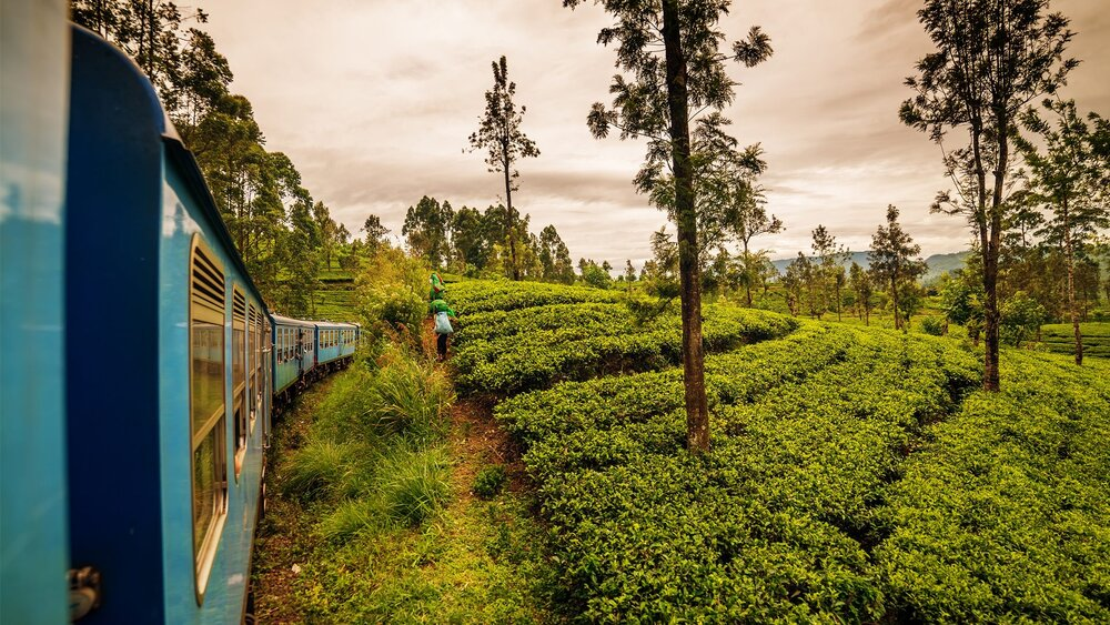 Why Traveling By Train Is Environmentally Friendly
